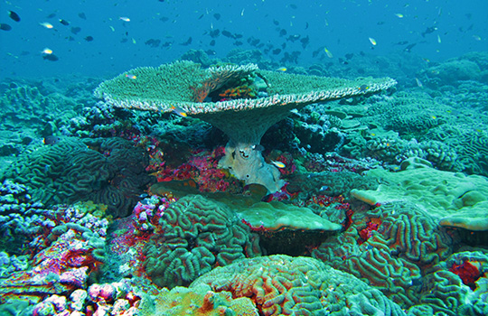 Why Care About Reefs?
